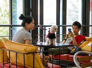 В Южной Корее открылось необычное кафе «Dog Cafe»